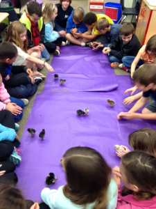 For the past three years, YSEF funded the expansion of the embryology program from one classroom to all second grade classrooms through the generosity of one private donor participating in the PA State EITC grant program.